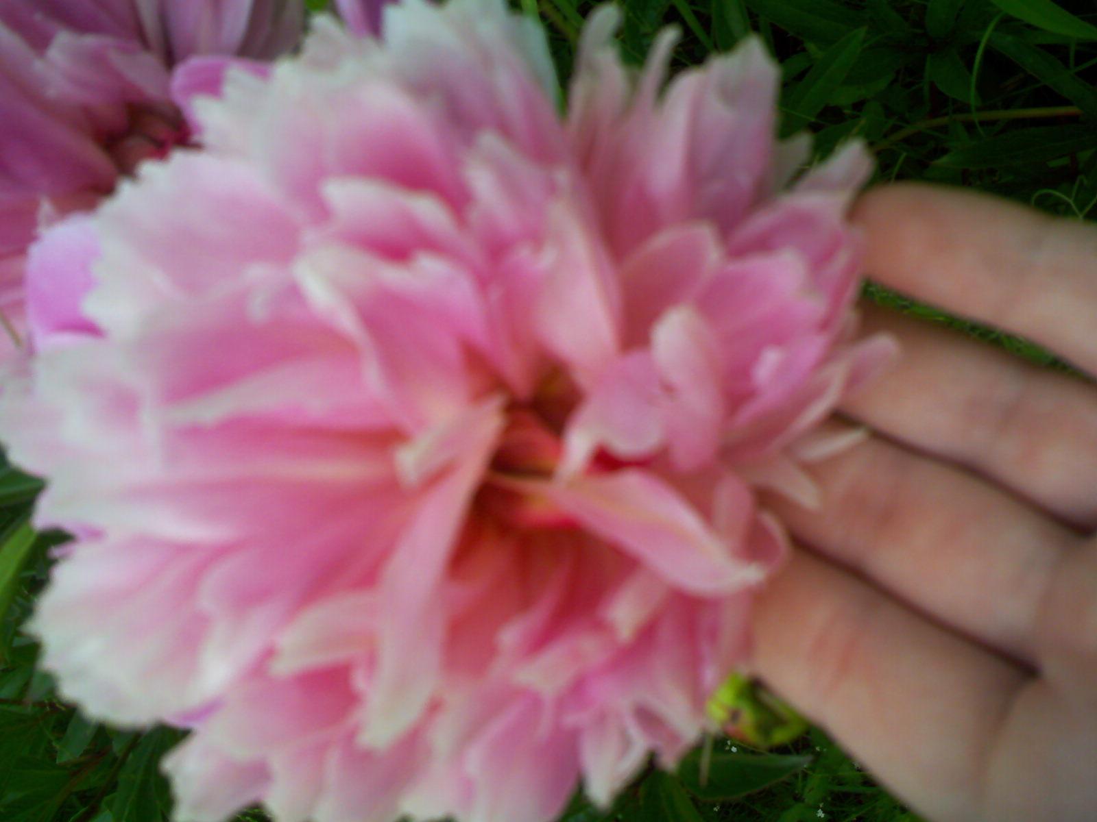 Совсем ручной цветок…