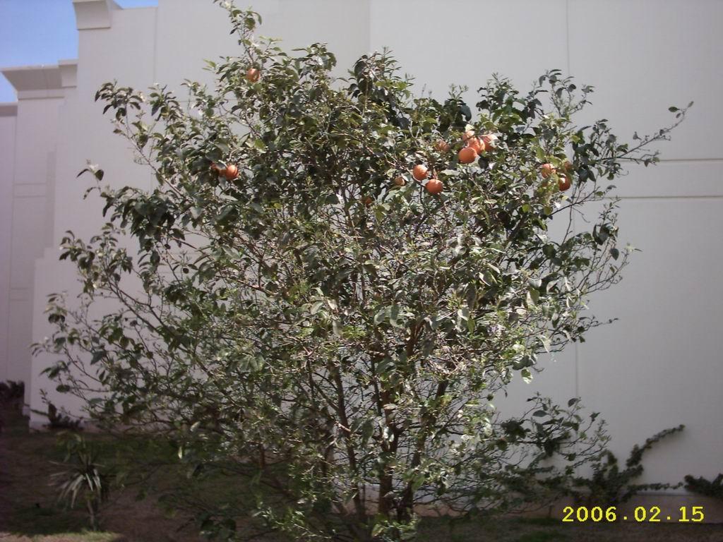 Апельсинки