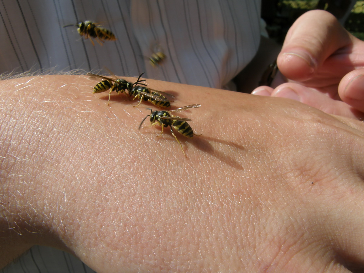 Пчелиный друг