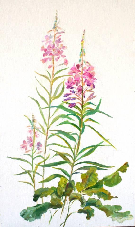 Картинка иван-чая на прозрачном фоне